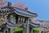 櫻。東方寺:IMG_12981.jpg