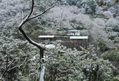 雪。陽明山:IMG_7198.jpg