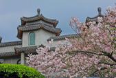櫻。東方寺:IMG_12982.jpg