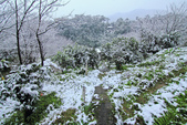 雪。陽明山:IMG_7237.jpg