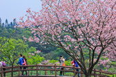 櫻。三生步道:IMG_8386.jpg