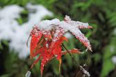 雪。陽明山:IMG_7243.jpg