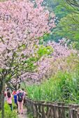 櫻。三生步道:IMG_8389.jpg