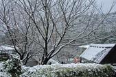 雪。陽明山:IMG_7254.jpg
