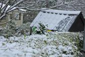 雪。陽明山:IMG_7257.jpg