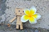 雞蛋花。:IMG_9467.jpg