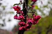 九族。櫻花季:IMG_4658.jpg