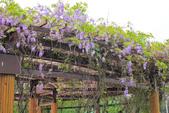 紫の浪漫。:IMG_8584.jpg