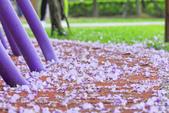 紫の浪漫。:IMG_8579.jpg