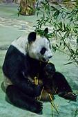 遊。木柵動物園:IMG_0058.jpg