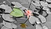 植物園。:1.jpg