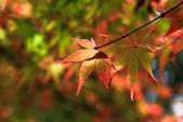 秋の福壽山。:IMG_6194.jpg