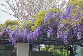 紫藤の恋。:IMG_3353.jpg