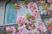 櫻。東方寺:IMG_12990.jpg