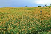 六十石山の金針花季。:IMG_10498.jpg