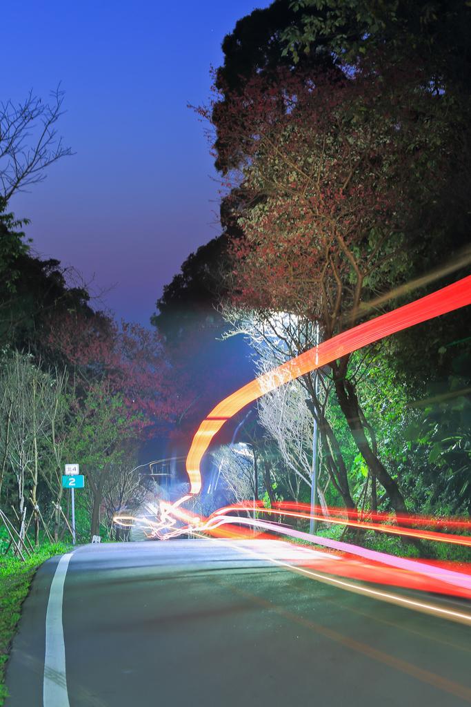 櫻。滬尾櫻花大道:IMG_14786.jpg