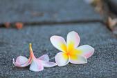 雞蛋花。:IMG_9483.jpg