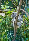 遊。木柵動物園:IMG_0008.jpg