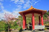櫻。屈尺公園:IMG_7541.jpg