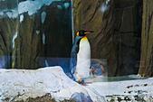 遊。木柵動物園:IMG_0182.jpg