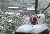 雪。陽明山:IMG_7209.jpg