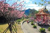 櫻。屈尺公園:IMG_7542.jpg