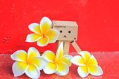 雞蛋花。:IMG_9476.jpg