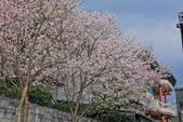 櫻。東方寺:IMG_12983.jpg