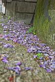 紫藤の恋。:IMG_3330.jpg