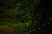 夜。螢火蟲:IMG_9695.jpg