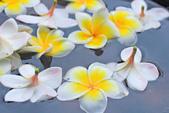 雞蛋花。:IMG_9482.jpg