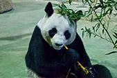 遊。木柵動物園:IMG_0059.jpg
