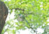 五色鳥。:IMG_10203.jpg