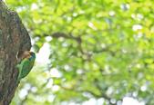 五色鳥。:IMG_10206.jpg