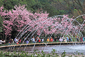 昭和櫻。:IMG_7854.jpg
