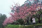 櫻。花園新城:IMG_7586.jpg