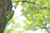 五色鳥。:IMG_10204.jpg