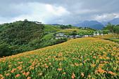 六十石山の金針花季。:IMG_10487.jpg
