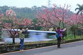 櫻。花園新城:IMG_7588.jpg