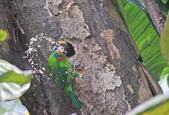 五色鳥。:IMG_10238.jpg