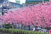 櫻。希望之河:IMG_8351.jpg
