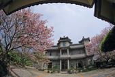 櫻。東方寺:IMG_12980.jpg