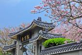 櫻。東方寺:IMG_12987.jpg