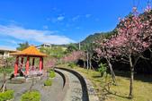 櫻。屈尺公園:IMG_7531.jpg
