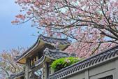 櫻。東方寺:IMG_12988.jpg