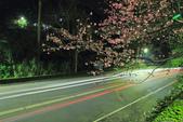櫻。花園新城:IMG_7605.jpg