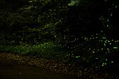 夜。螢火蟲:stackedImage3.jpg