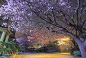 櫻。東方寺:IMG_8468.jpg