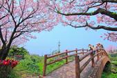 櫻。三生步道:IMG_8382.jpg