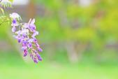 紫の浪漫。:IMG_8571.jpg